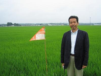 米山町の田んぼ